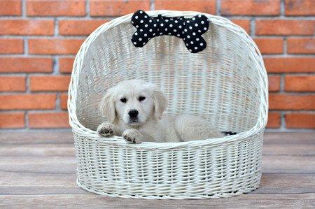 Wiklinowy kosz dla zwierząt z dachem i poduszką